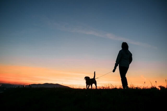 夜間に犬の散歩をする人