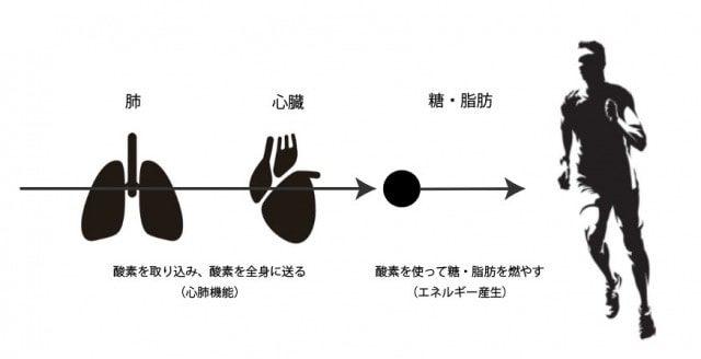 心肺機能の仕組み