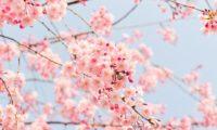 【春開催】おすすめのマラソン大会22選【3月・4月・5月】