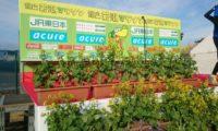 館山若潮マラソン2018出走レポ!~菜の花咲くコースと温かなおもてなし~