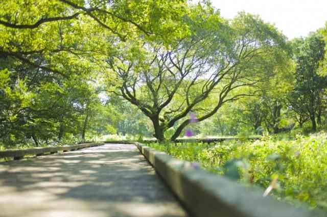 公園の木陰の道